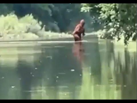 Download Michigan Bigfoot Video Crossing Cass River