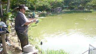 Pesca de Arapaima gigas o Pirarucu Ecoparque el Gaitero (Antioquia Colombia)