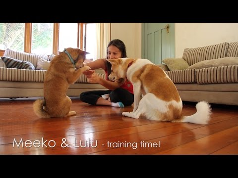 How to teach your dog 'Say your prayers'