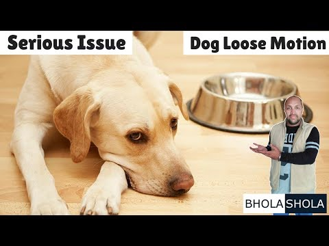 Pet Care - Serious Issue Dog Loose Motion - Bhola Shola