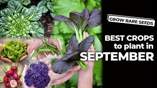 GROW RARE SEEDS | Best Crops To Plant In September