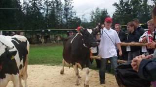 Agropromocja 2009 w Nawojowej- wystawa krów mlecznych