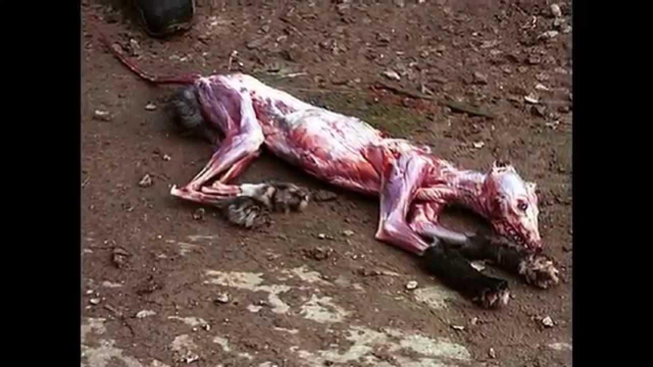 image animaux maltraites