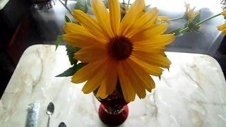 Как сделать чтобы цветы в вазе стояли дольше(, 2016-02-04T21:11:59.000Z)