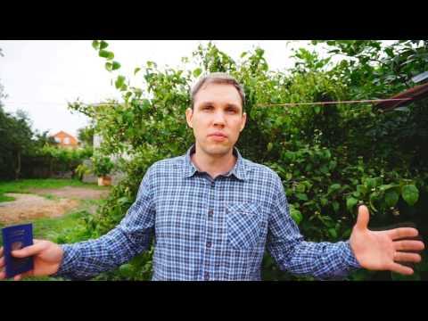 Я получил Вид на жительство в России. Что изменилось.