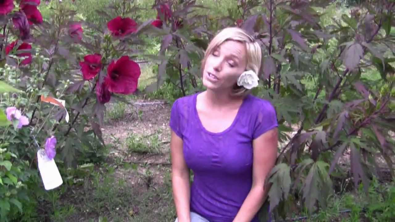 Different Types Of Hibiscus Flowers Step By Step Gardening Youtube