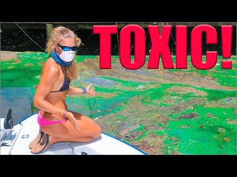 Did Florida GREEN ALGAE Destroy Fishing?