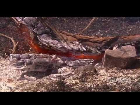 Bushfire Tragedy | 9 News Adelaide
