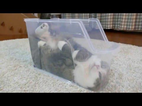 スリムなプラケースで寛ぐねこ。-Maru is relaxed in the slim plastic case.-