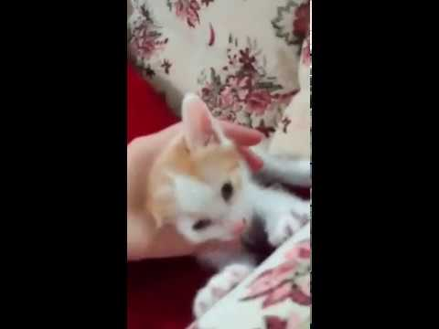 Little Kitten So Tired - Cute Cat 2017