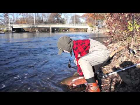 Fly fishing salmon river ny 2011 youtube for Salmon river ny fishing regulations