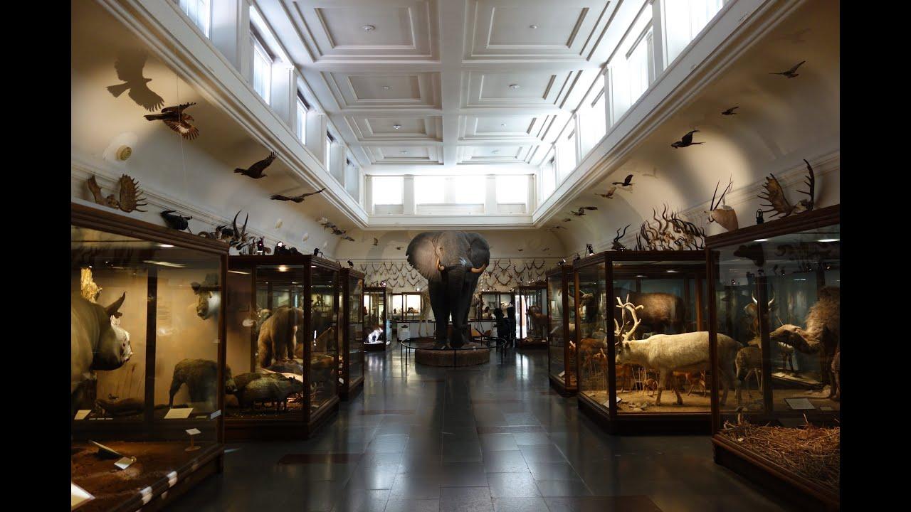 naturhistoriska museet göteborg