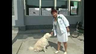 Акция Бездомные животные