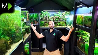 A FISH ROOM TOUR....IN A SHED 🤣 - All My Nature Aquariums & Aquascape Plans
