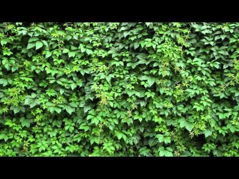 EarthGang Feat Trinidad Jame$