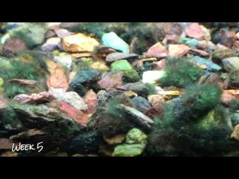 Nualgi Freshwater 6 Weeks Results Planted Aquarium