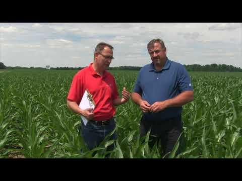 Corn School -  Fungicides