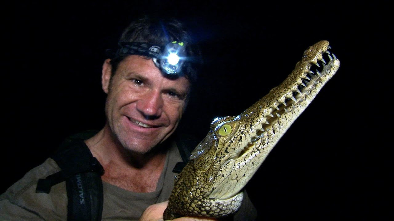 American Crocodile - Up Close and Personal - Deadly 60 - Series 2 - BBC