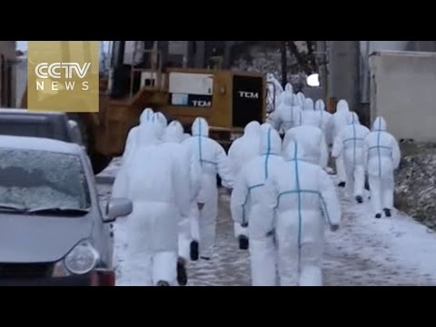 Japan detects bird flu in Niigata and Aomori
