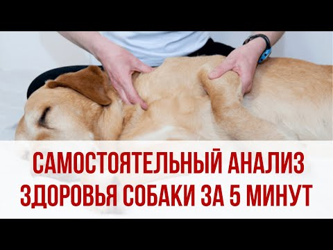Вопрос: Как поддерживать здоровье собаки в хорошем состоянии?