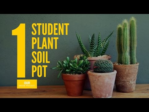 Our Green Project: 1 Student, 1 Plant, 1 Soil, 1 Pot, Can Change The World