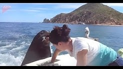 Sea Lion begs for food just like a dog