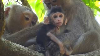 Pity adorable monkey, Why climb on newborn while breastfeeding