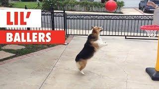 さあ、行くよ!シュートだ!夢中になってボール遊びを楽しむペットたち
