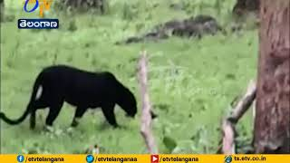 People in Fear with Black Panther | at Sathyamangalam Forest Area | Tamil Nadu