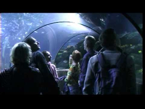 Sealife Hannover Youtube