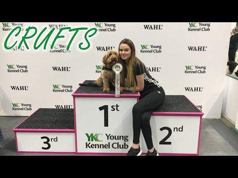 Crufts 2018 YKC Agility Dog of the Year - Poppy Cockapoo