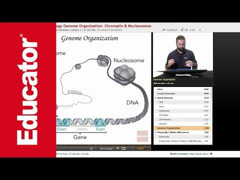 Genome Organization | Molecular Biology