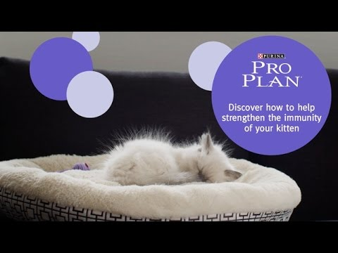 PRO PLAN Kitten With OPTISTART