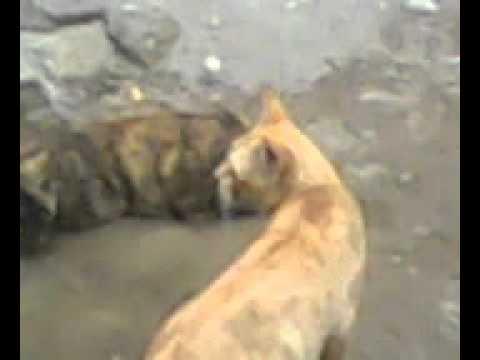 kids kucing ingusan demen seks