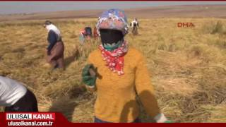 Mevsimlik tarım işçilerine yönelik genelge Resmi Gazete'de yayımlandı