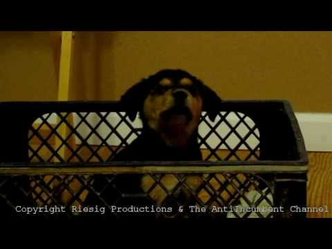 Best Dog Vine Compilation Episode 1