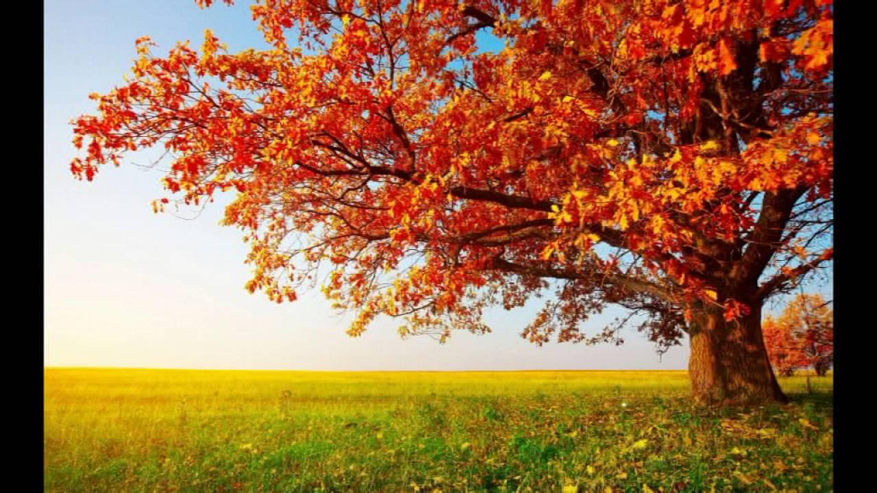 Fall Trees Wallpaper For Desktop Prece Para Acalmar O Cora 231 227 O E Pedir Assist 234 Ncia Aos Bons