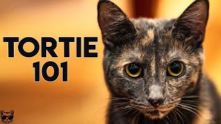 Tortoiseshell Cat 101  Everything You Need To Know About Tortie Cats