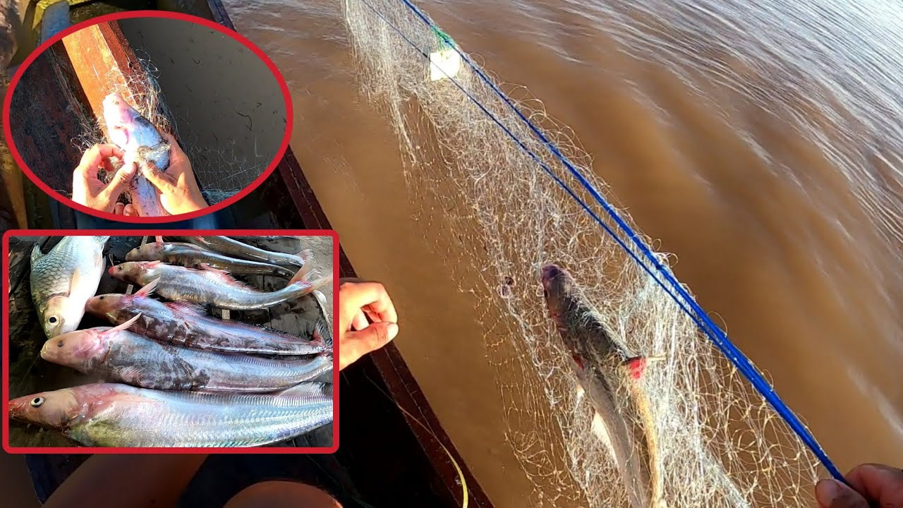 วันนี้หมานๆ ได้ปลาเนื้ออ่อนแม่น้ำโขง ไซต์สวยๆราคาดี