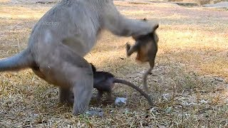O.M.G! Skippy Squeeze Jilla Away! Why Skippy Doing Like this On Jilla, Very Pity Baby!