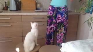 Дрессируем кошку.  КотОотпуск.  Урок № 1 -