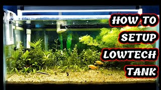 How to setup super low tech dirted planted aquarium | Aqua adventure |