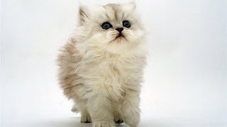 Лучшие приколы с кошками Кошки вместо будильника по утрам