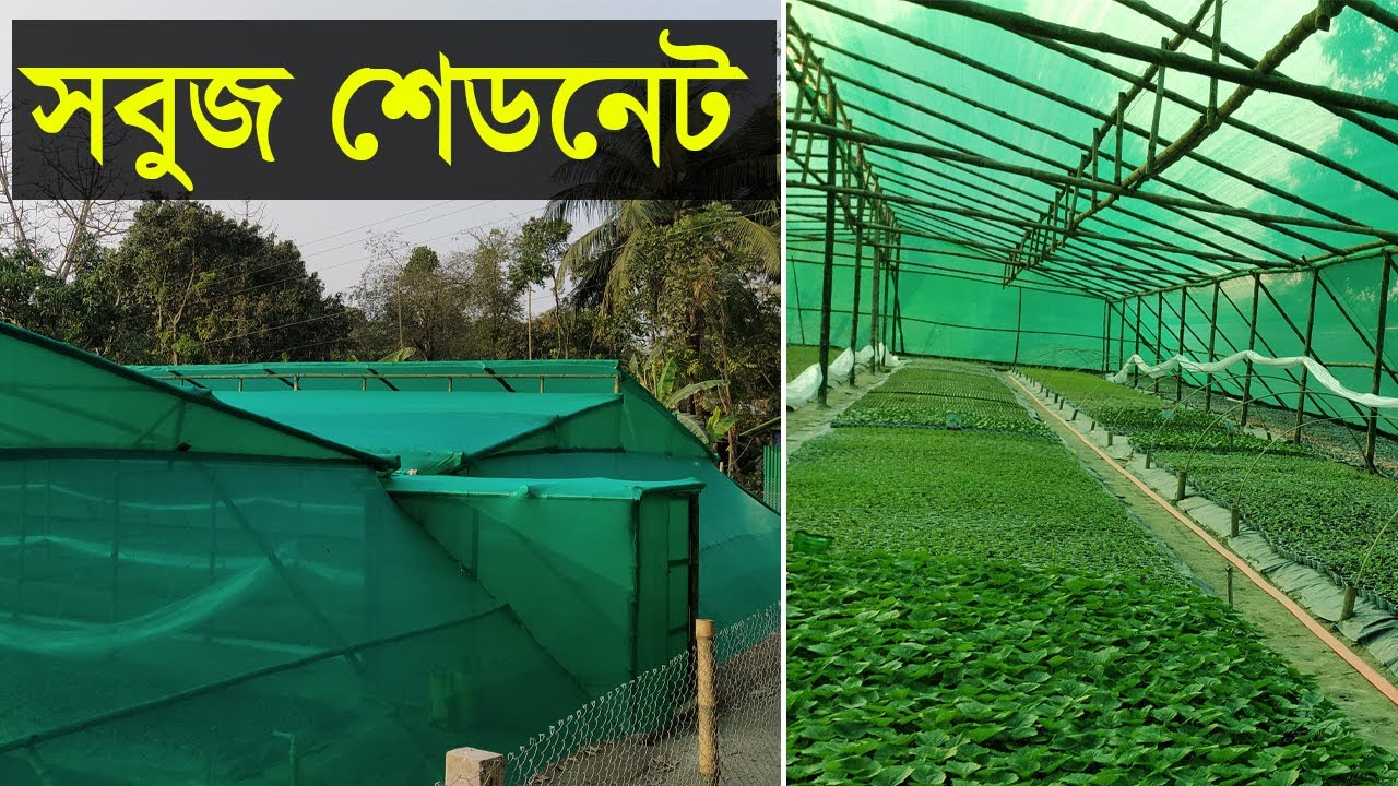 মাটি ছাড়া সুস্থ চারা তৈরী করুন সবুজ শেড নেটে । উন্নত মানের গ্রীন হাউজের সবুজ নেট | Green Shade Net