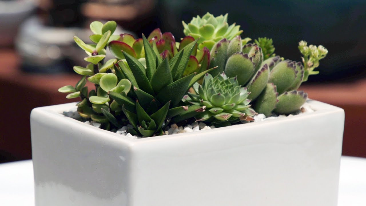 Window Sill Succulent Container Garden Youtube