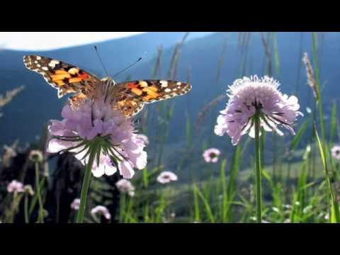 Now We Are Free ~ Inspirational Video