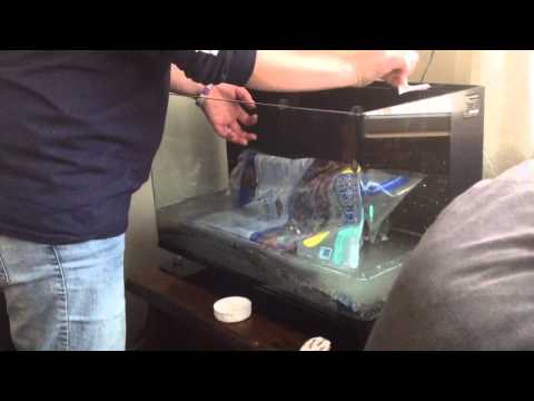Mini Aquarium Setup Tutorial