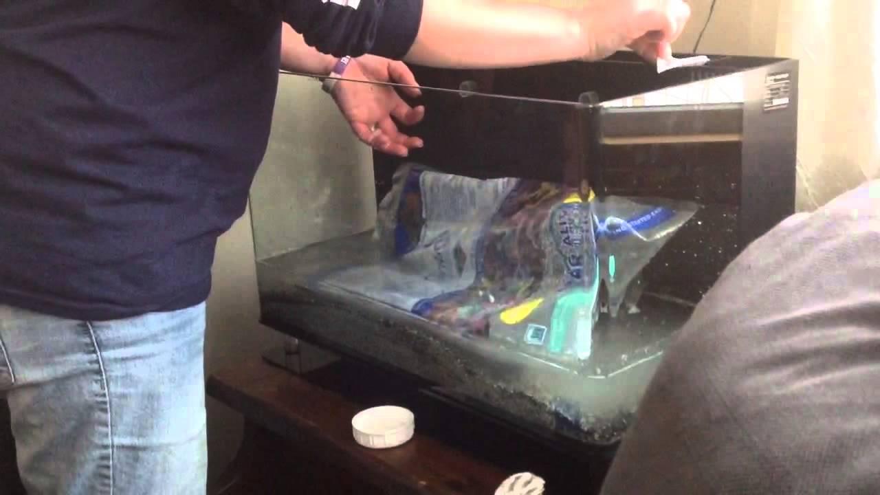 mini aquarium set