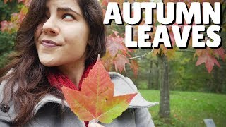 The Science of Autumn Leaves  🍂
