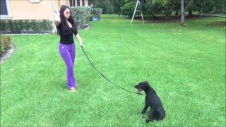 Dog Trainer Reviews K9 Enforcement Real Reviews